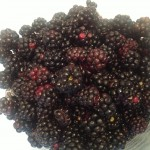 mures fruits 1